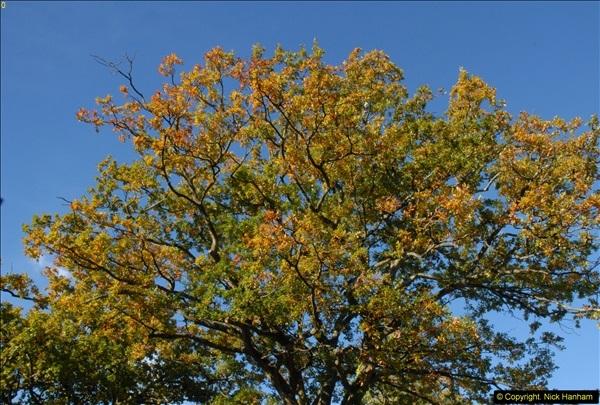 2013-11-10 Autumn in Poole, Dorset.  (108)108