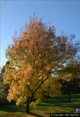 2013-11-10 Autumn in Poole, Dorset.  (109)109