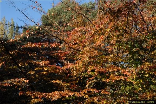 2013-11-10 Autumn in Poole, Dorset.  (11)011