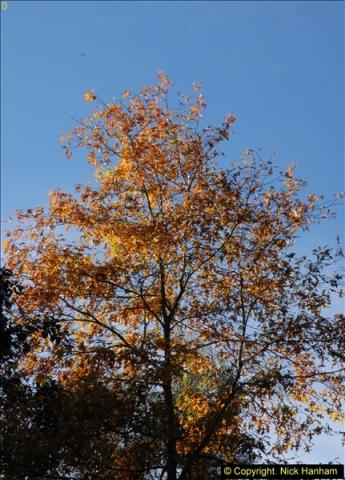 2013-11-10 Autumn in Poole, Dorset.  (12)012