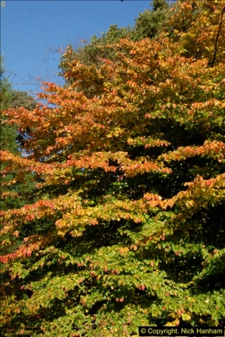 2013-11-10 Autumn in Poole, Dorset.  (14)014