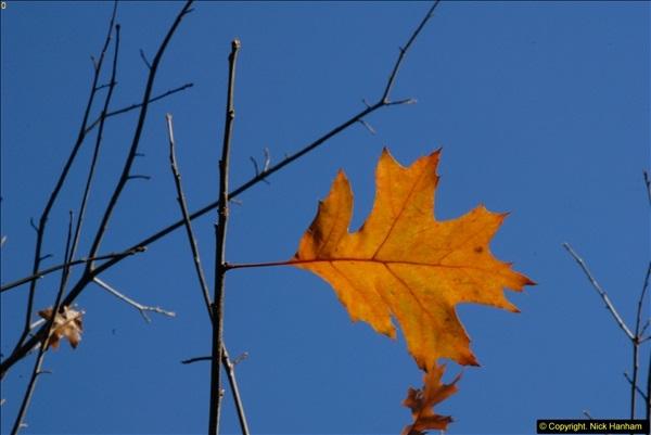2013-11-10 Autumn in Poole, Dorset.  (15)015