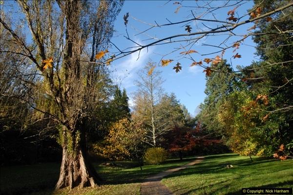 2013-11-10 Autumn in Poole, Dorset.  (16)016