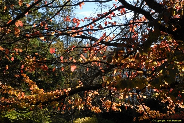2013-11-10 Autumn in Poole, Dorset.  (17)017