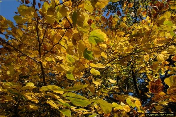 2013-11-10 Autumn in Poole, Dorset.  (19)019