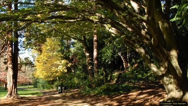 2013-11-10 Autumn in Poole, Dorset.  (23)023
