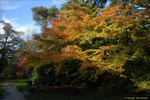 2013-11-10 Autumn in Poole, Dorset.  (27)027