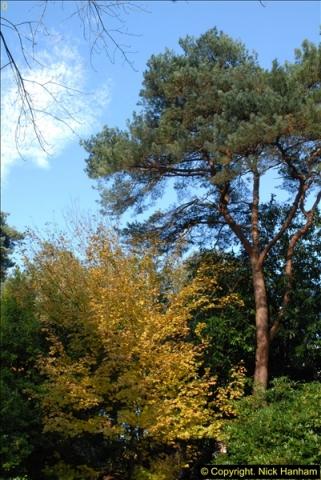 2013-11-10 Autumn in Poole, Dorset.  (29)029
