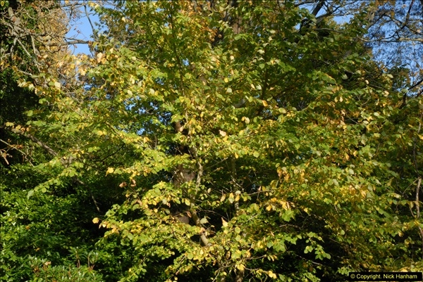 2013-11-10 Autumn in Poole, Dorset.  (32)032