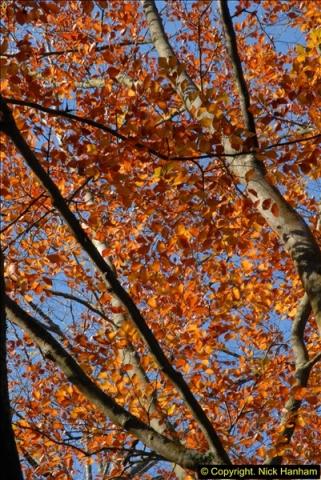 2013-11-10 Autumn in Poole, Dorset.  (35)035