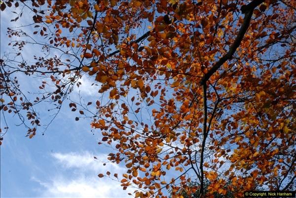 2013-11-10 Autumn in Poole, Dorset.  (36)036