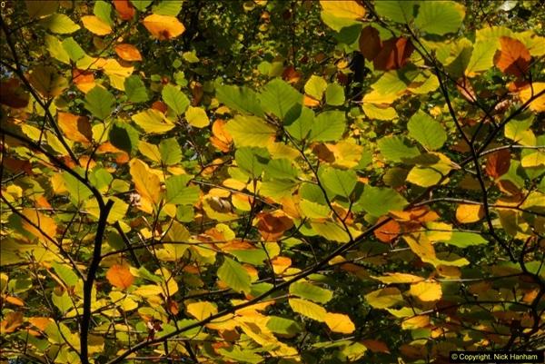 2013-11-10 Autumn in Poole, Dorset.  (39)039
