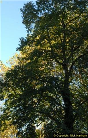2013-11-10 Autumn in Poole, Dorset.  (4)004