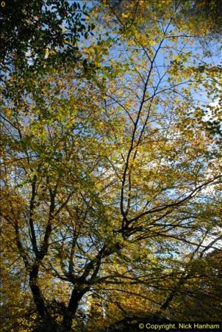 2013-11-10 Autumn in Poole, Dorset.  (40)040