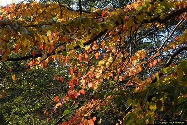 2013-11-10 Autumn in Poole, Dorset.  (41)041