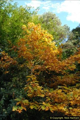2013-11-10 Autumn in Poole, Dorset.  (42)042