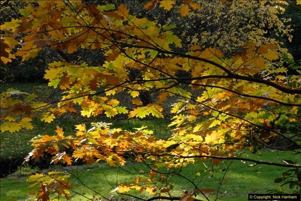 2013-11-10 Autumn in Poole, Dorset.  (44)044