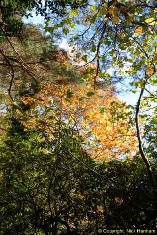2013-11-10 Autumn in Poole, Dorset.  (47)047