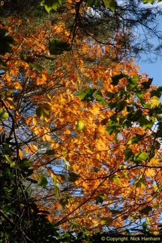 2013-11-10 Autumn in Poole, Dorset.  (48)048