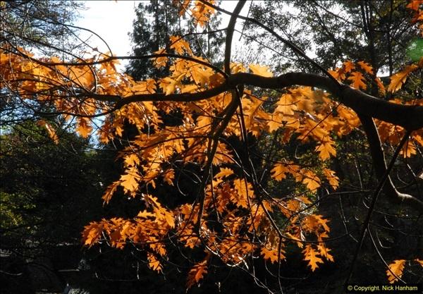 2013-11-10 Autumn in Poole, Dorset.  (49)049