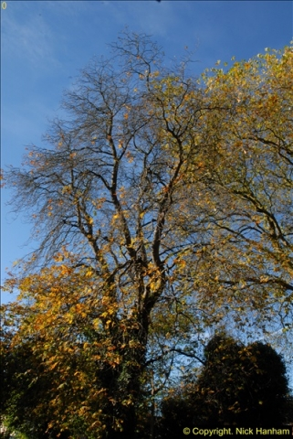 2013-11-10 Autumn in Poole, Dorset.  (5)005