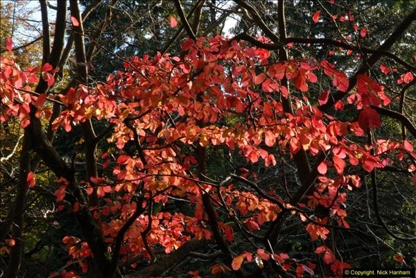 2013-11-10 Autumn in Poole, Dorset.  (50)050