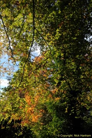 2013-11-10 Autumn in Poole, Dorset.  (51)051