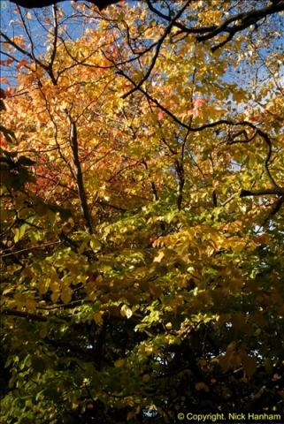 2013-11-10 Autumn in Poole, Dorset.  (58)058