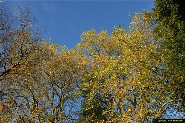 2013-11-10 Autumn in Poole, Dorset.  (6)006