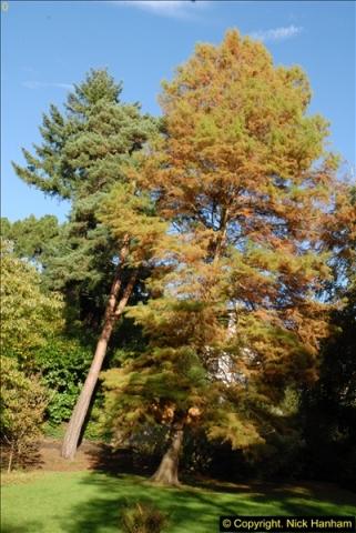 2013-11-10 Autumn in Poole, Dorset.  (60)060