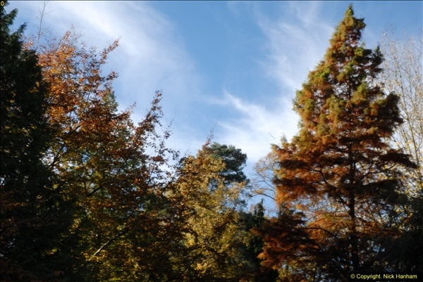 2013-11-10 Autumn in Poole, Dorset.  (63)063