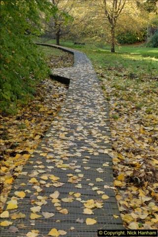 2013-11-10 Autumn in Poole, Dorset.  (64)064