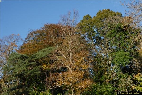 2013-11-10 Autumn in Poole, Dorset.  (71)071