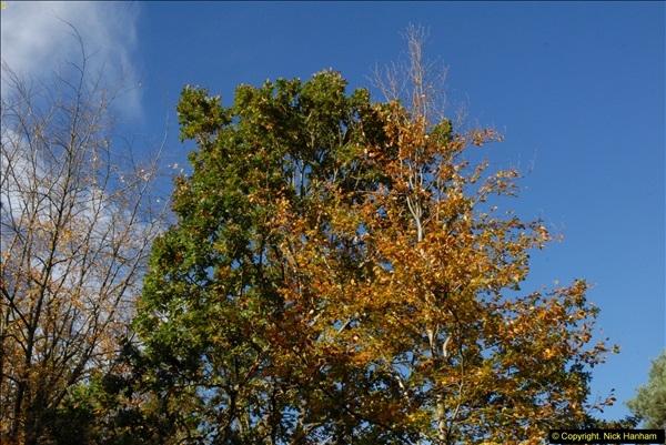 2013-11-10 Autumn in Poole, Dorset.  (78)078