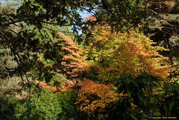 2013-11-10 Autumn in Poole, Dorset.  (79)079