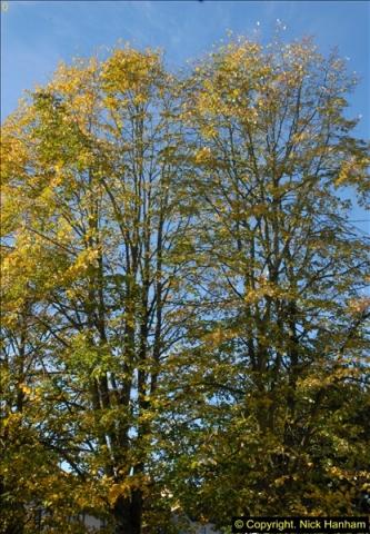 2013-11-10 Autumn in Poole, Dorset.  (8)008