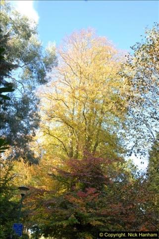 2013-11-10 Autumn in Poole, Dorset.  (93)093
