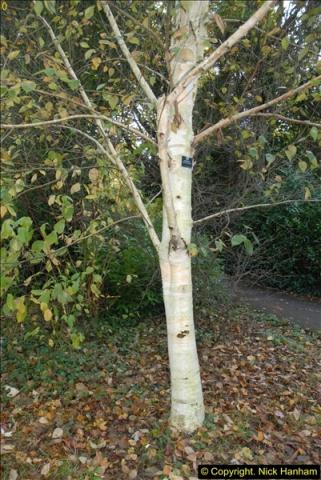 2013-11-10 Autumn in Poole, Dorset.  (95)095