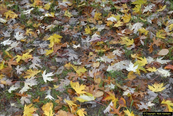 2013-11-10 Autumn in Poole, Dorset.  (98)098