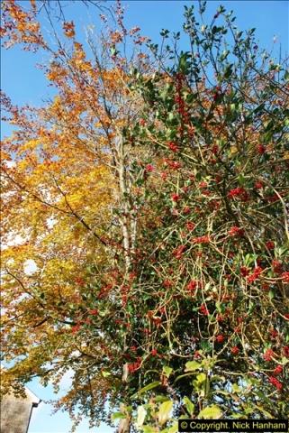 2013-11-16 Autumn in Poole, Dorset.  (10)129