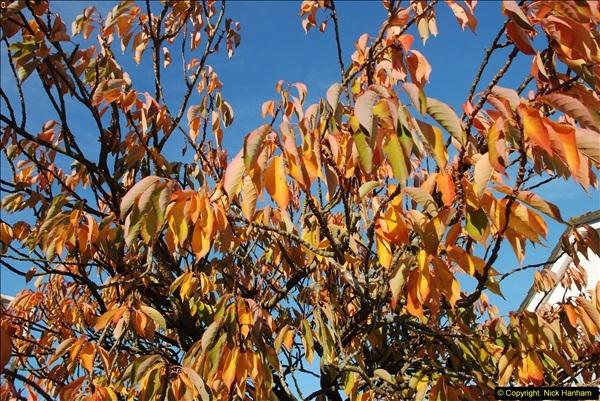 2013-11-16 Autumn in Poole, Dorset.  (1)120