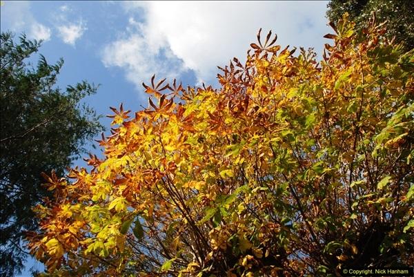 2013-11-16 Autumn in Poole, Dorset.  (12)131