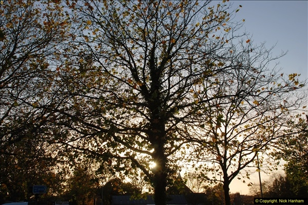 2013-11-16 Autumn in Poole, Dorset.  (13)132