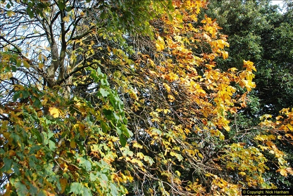 2013-11-16 Autumn in Poole, Dorset.  (4)123