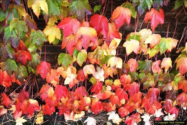 2013-11-16 Autumn in Poole, Dorset.  (6)125