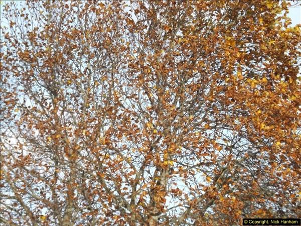 2013-11-22 Autumn in Poole, Dorset. (1)133