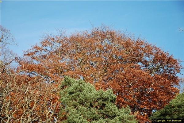 2013-11-30 Autumn in Poole, Dorset.  (24)158