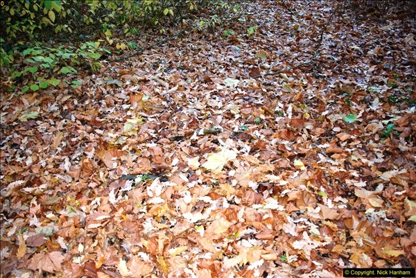 2013-11-30 Autumn in Poole, Dorset.  (30)164