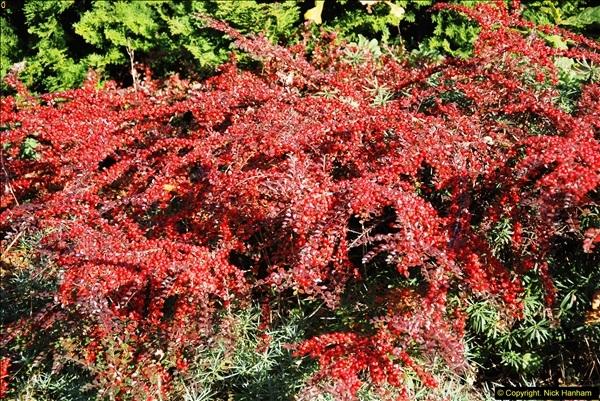 2013-11-30 Autumn in Poole, Dorset.  (37)171