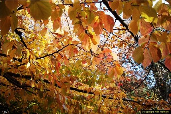 2013-11-30 Autumn in Poole, Dorset.  (4)138